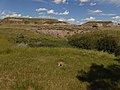 Richardson's ground squirrel and Midland Provincial Park.jpg