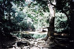 Osun river in Osogbo, Osun state