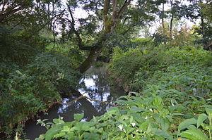 River Flit - River Flit in Flitwick Moor