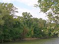 River Mur, Andritz(1).jpg