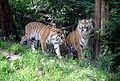 Rivne zoopark.jpg