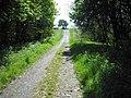 Road through Cousland Wood - geograph.org.uk - 1306365.jpg
