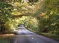 Road through woodland - geograph.org.uk - 1023813.jpg
