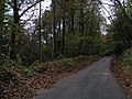 Road through woods heading to the top of Haldon Hill - geograph.org.uk - 1565645.jpg