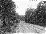 Road to Sassafras Gully, Springwood (4903266905).jpg