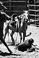 Rodeo Paita Nouvelle Calédonie.jpg