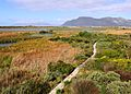 Rondevlei Wetlands Nature Reserve - Cape Town SA 8.JPG