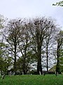 Rookery, St James's Churchyard, Chawleigh - geograph.org.uk - 1278275.jpg