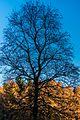 Rotes Moor, 20151101-034.jpg