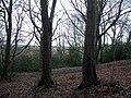 Rowbrow Wood - geograph.org.uk - 1778120.jpg