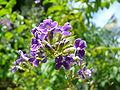 Royale fleurs flowers violette purple.jpg