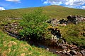 Ruin Beside the Allt na Criche - geograph.org.uk - 1348104.jpg