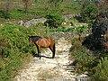 Ruta de Padrendo, Lobios. Cabalos.jpg