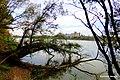 Rzeka Wisła widok z prawego brzegu rzeki w kierunku Fordonu. Widok - Zakłady Zbożowe Fordon - panoramio (4).jpg