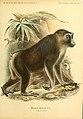 Säugethiere vom Celebes- und Philippinen-Archipel (Taf. I) (5985196196).jpg