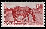 Saar 1949 265 Tag des Pferdes.jpg