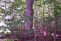 Sacred Grove - panoramio.jpg