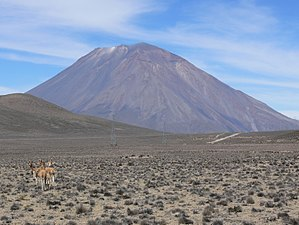 Salinas y Aguada Blanca National Reserve - Guanacos with Misti volcano in the background at Salinas y Aguada Blanca National Reserve.