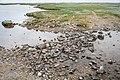 Saltholm - panoramio (11).jpg