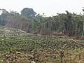 Salto de Agua, Chis., Mexico - panoramio (10).jpg