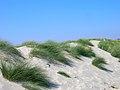 Sand Dunes, East Head - geograph.org.uk - 522934.jpg