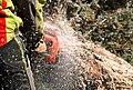 Sawdust from a chainsaw 01.jpg