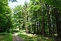 Schleswig-Holstein, Itzehoe, Landschaftsschutzgebiet Gehege Überstör und Katzenkuhle NIK 6647.JPG