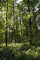 Schleswig-Holstein, Kellinghusen, Landschaftsschutzgebiet Waldfläche bei Kellinghusen NIK 1282.JPG