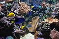 Sea Life Centre, Blackpool (5665).jpg