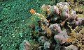 Sea Slug (Hypselodoris infucata) (6064655785).jpg