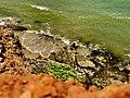 Sea view in the wilpattu.jpg