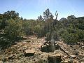 Secret Canyon Trail, Sedona, Arizona - panoramio (33).jpg