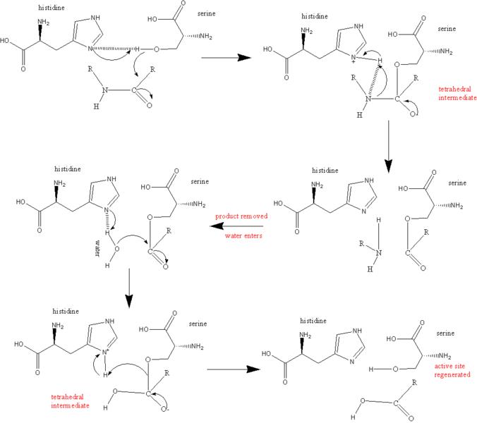 Protease | Medical silver