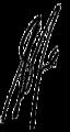 Shania twain signature.png