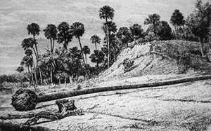 History of Florida - A shell midden at Enterprise in 1875.