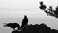 Silhouette of birds near the Muir Beach overlook-0090.jpg