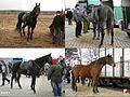 """Skaryszew, """"Wstępy"""" - Skaryszewski Jarmark Koński 2012 - fotopolska.eu (285812).jpg"""