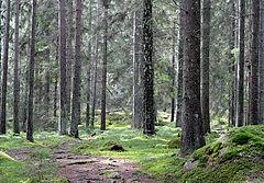 Skov ved Nävsøen i Södermanland.jpg