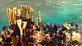Snorkeling Lac Bay, Bonaire (12841752835).jpg