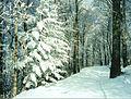 Snow Fall At Woody's Knob Summit.jpg