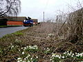Snowdrops by the roadside - geograph.org.uk - 1712165.jpg