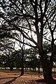 Sol entre Árvores.jpg