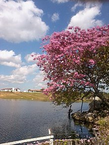 Solonópole Ceará fonte: upload.wikimedia.org