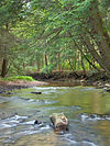 South Branch Tionesta CreekCanopied.jpg