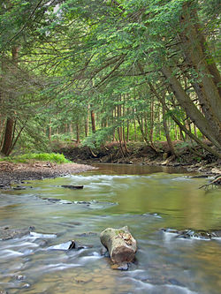 South Branch Tionesta Creek within the Allegheny National Forest in the township, June 2011