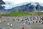 South Georgia Photo by Sascha Grabow.jpg