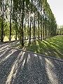 Sowjetischen Ehrenmal Treptow Baumreihen.jpg