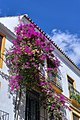 Spain Andalusia Marbella BW 2015-10-28 12-39-34 1 2.jpg