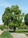 spaubeek-wegkruis bij kasteel jansgeleen (2)