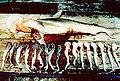 Sphyrna tiburo with pups.jpg